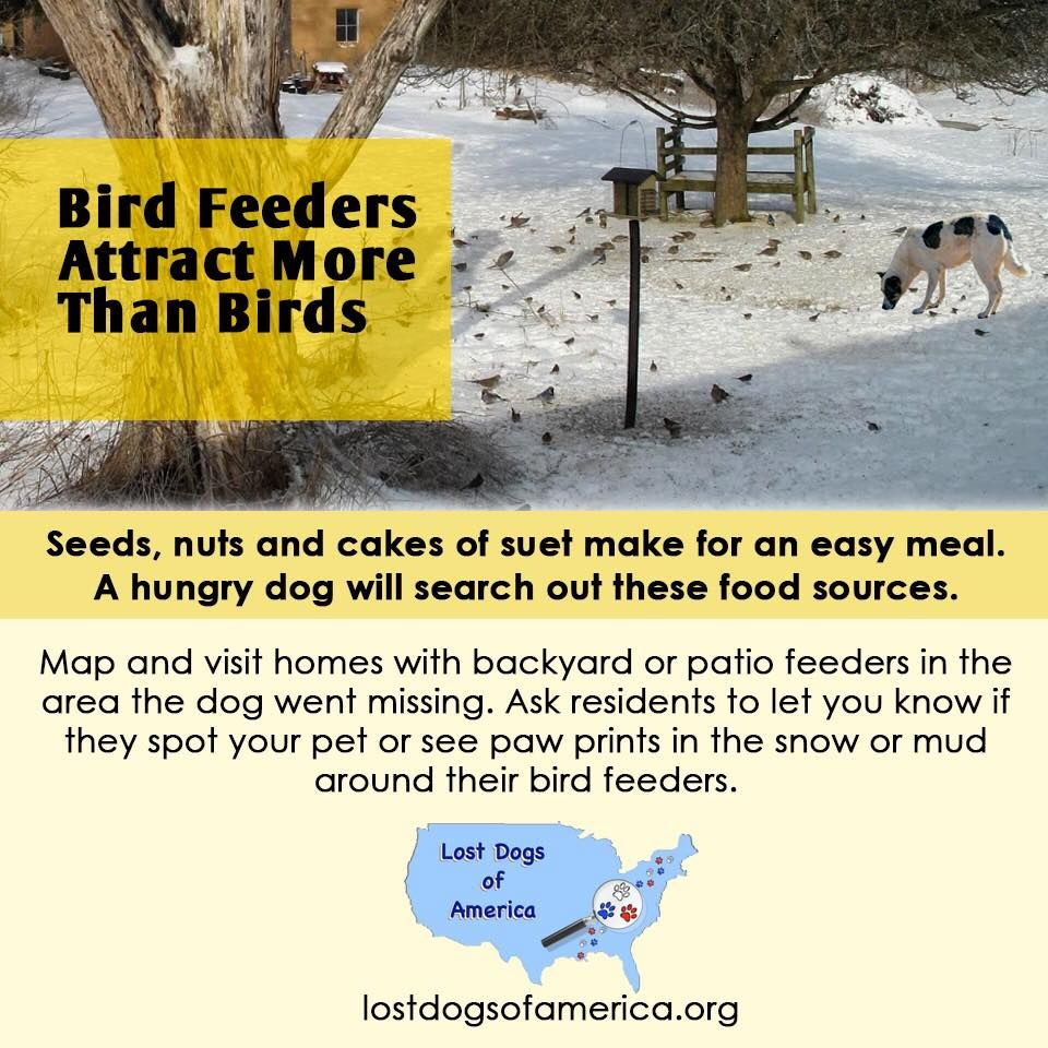 Lost Dogs Eat Birdseed Losing A Dog Bird Seed Dogs