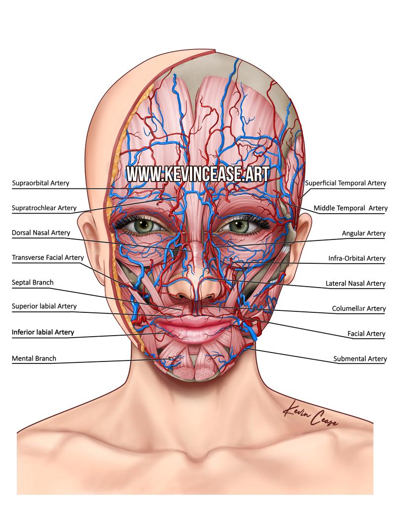 Skin Cutaway For Botox Injection Instruction On Behance Nursing