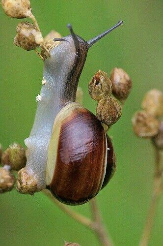 Пин от пользователя kat eye на доске snails | Улитка ...