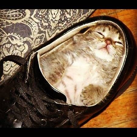 Ellen Degeneres Shared This Lovely Kitty In Shoe Cute Animals Kittens Funny Funny Cat Pictures