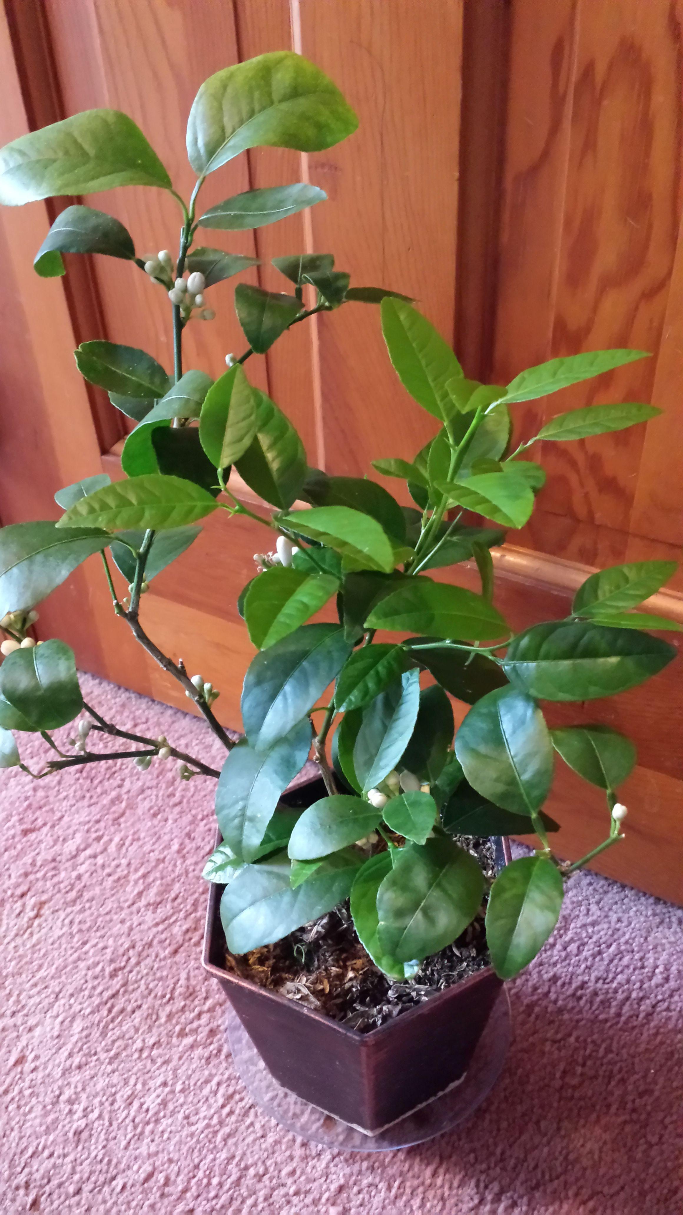 Free Plant Identification Plants, Plant identification