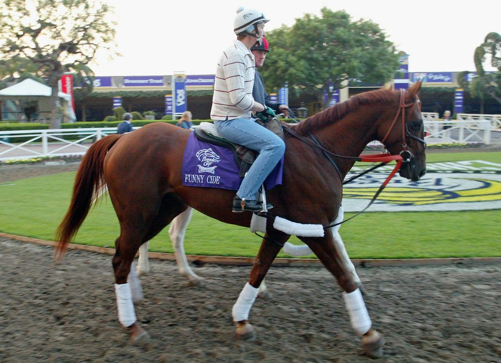The first New York-bred horse to win the Kentucky Derby, Funny Cide decisively won the first two Triple Crown gems but faltered on the muddy Belmont track to finish third. He was also the first gelding to win the Derby since Clyde Van Dusen in 1929.