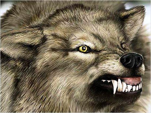 ن خلية الذئب المنفرد مقال عماد الدين أديب في الوطن Animals Panther Lion