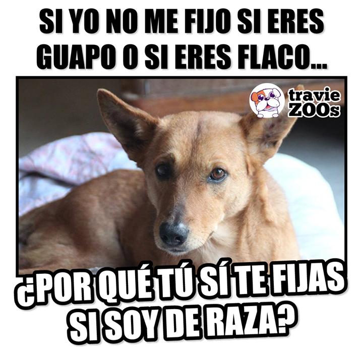 Untitled Perros Perros Frases Perros En Adopcion