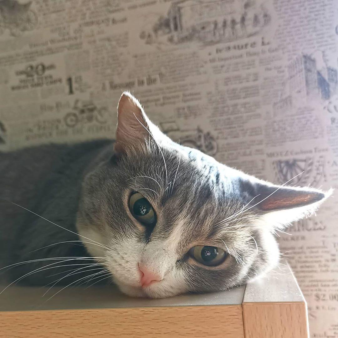 Grust Ona Takaya Stolko Skazano Glazami Domashniepitomcy Cats Catsofinstagram Cat Of Catstagram Instagram Catlo In 2020 Pet Kitten Kitten Meowing Kittens