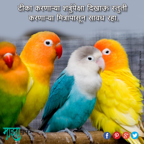 Meaning Quote 73 Marathi Quotes Pinterest Colorful birds