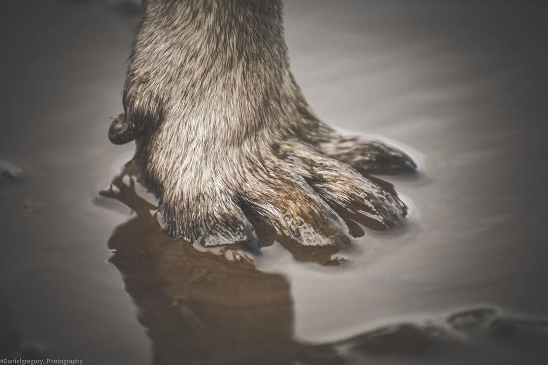Who needs wellies .... #dog #dogsofinstagram #dogs #puppy #dogstagram #instadog #pet #doglover #love #dogoftheday #cute #doglovers #instagram #pets #of #puppylove #doggo #puppies #cat #doglife #puppiesofinstagram #ilovemydog #dogsofinsta #animals #hund #doggy #petstagram #k #animal