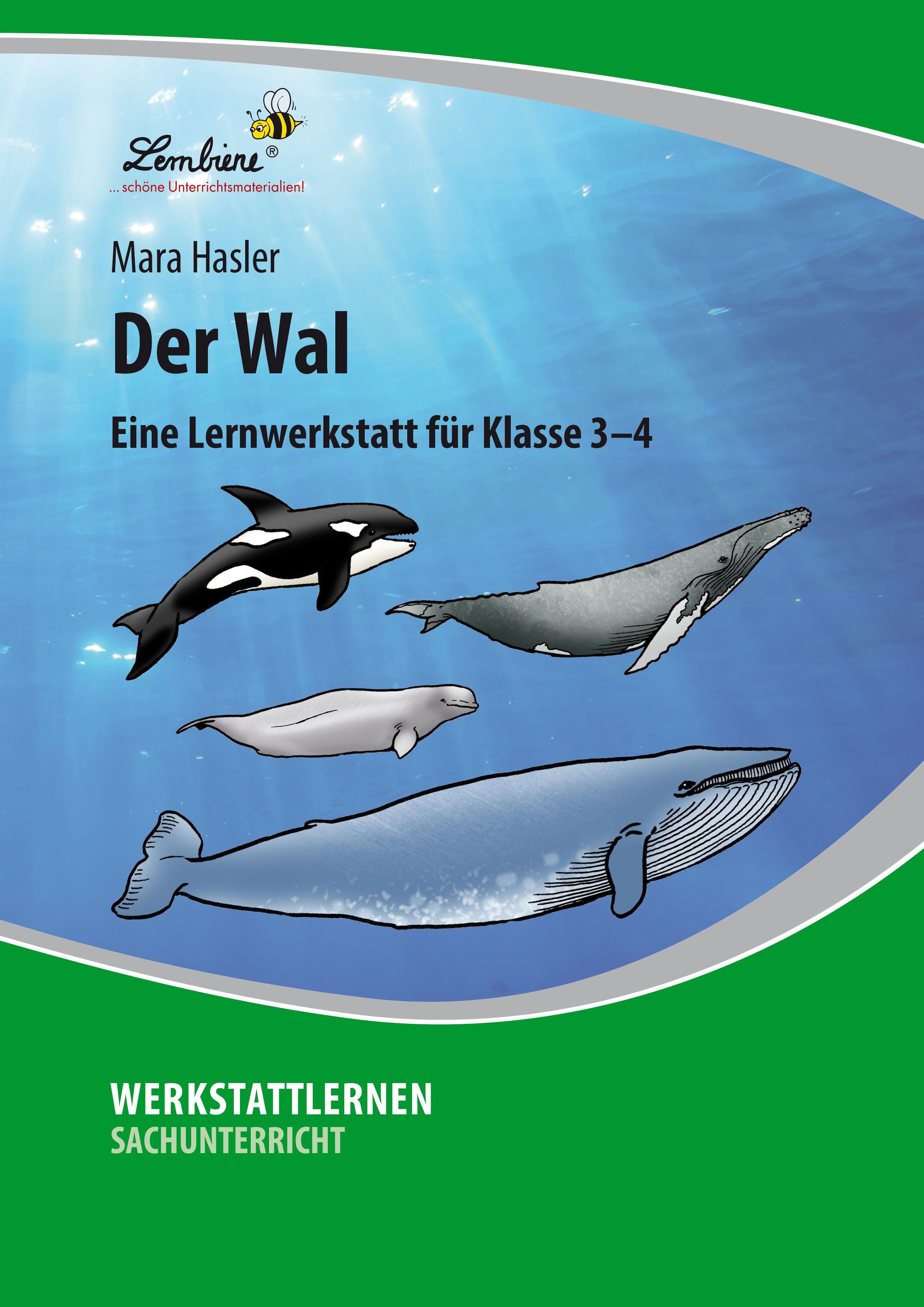Pin Auf Wal
