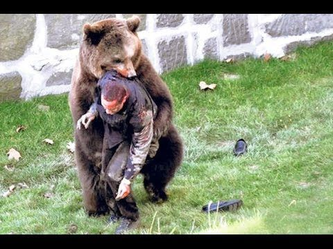 Grizzly Bear Eats Man Pictures