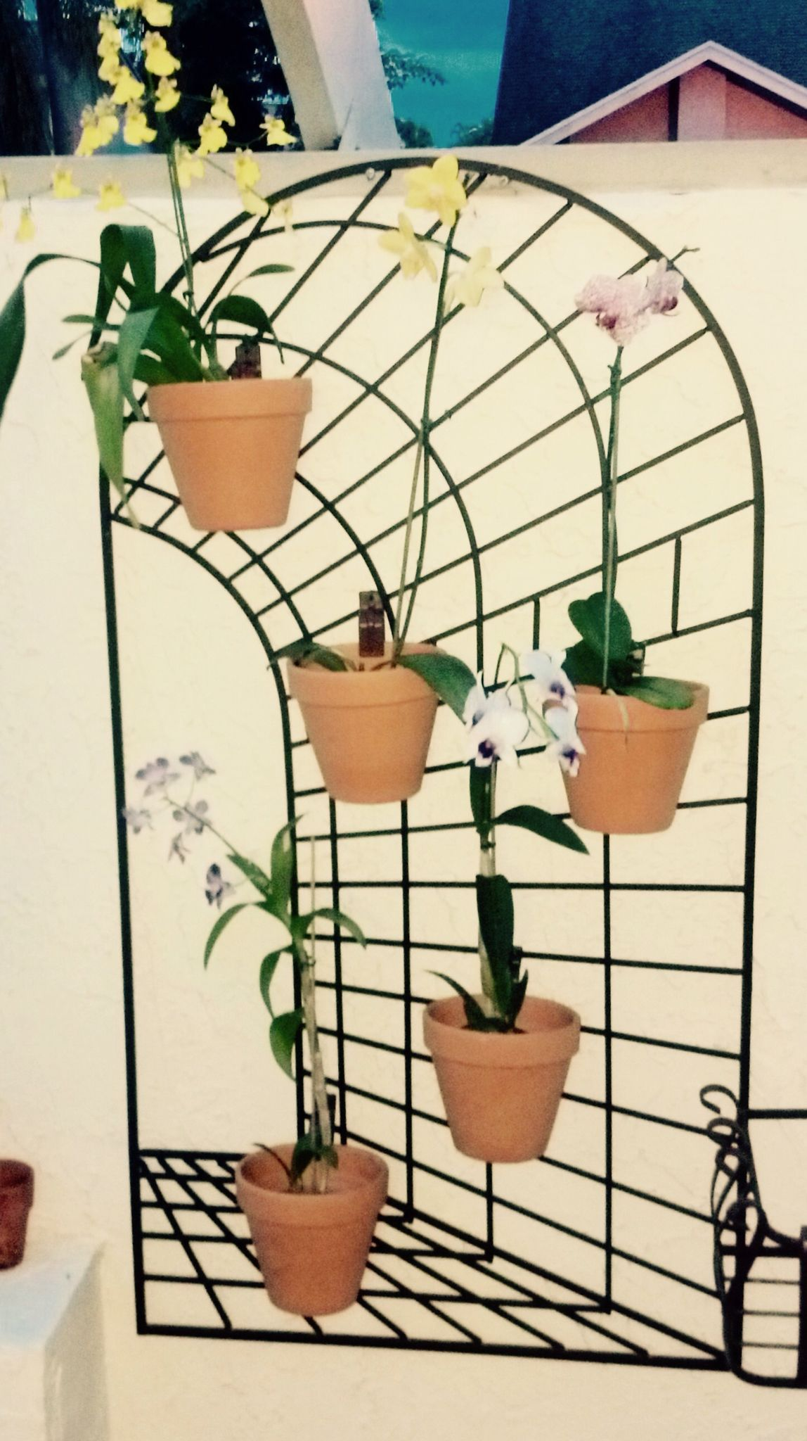 Diy Orchids Secured To A Wrought Iron Trellis With Hangapots Or Is The Metal Backdrop Actually Container Garden Design Flower Pot Hanger Vertical Garden Indoor