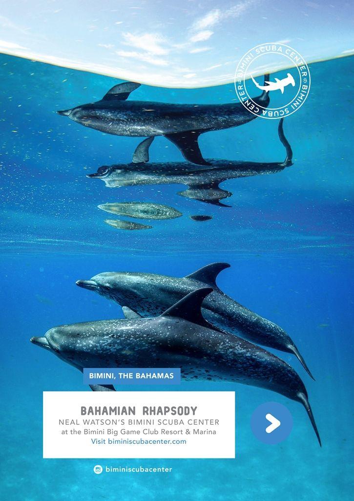 Bahamas Island, Diving, Caribbean Vacations