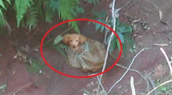 Justice For Helpless Puppy Tied In A Bag And Tossed In a Ravine To Perish!   PetitionHub.org
