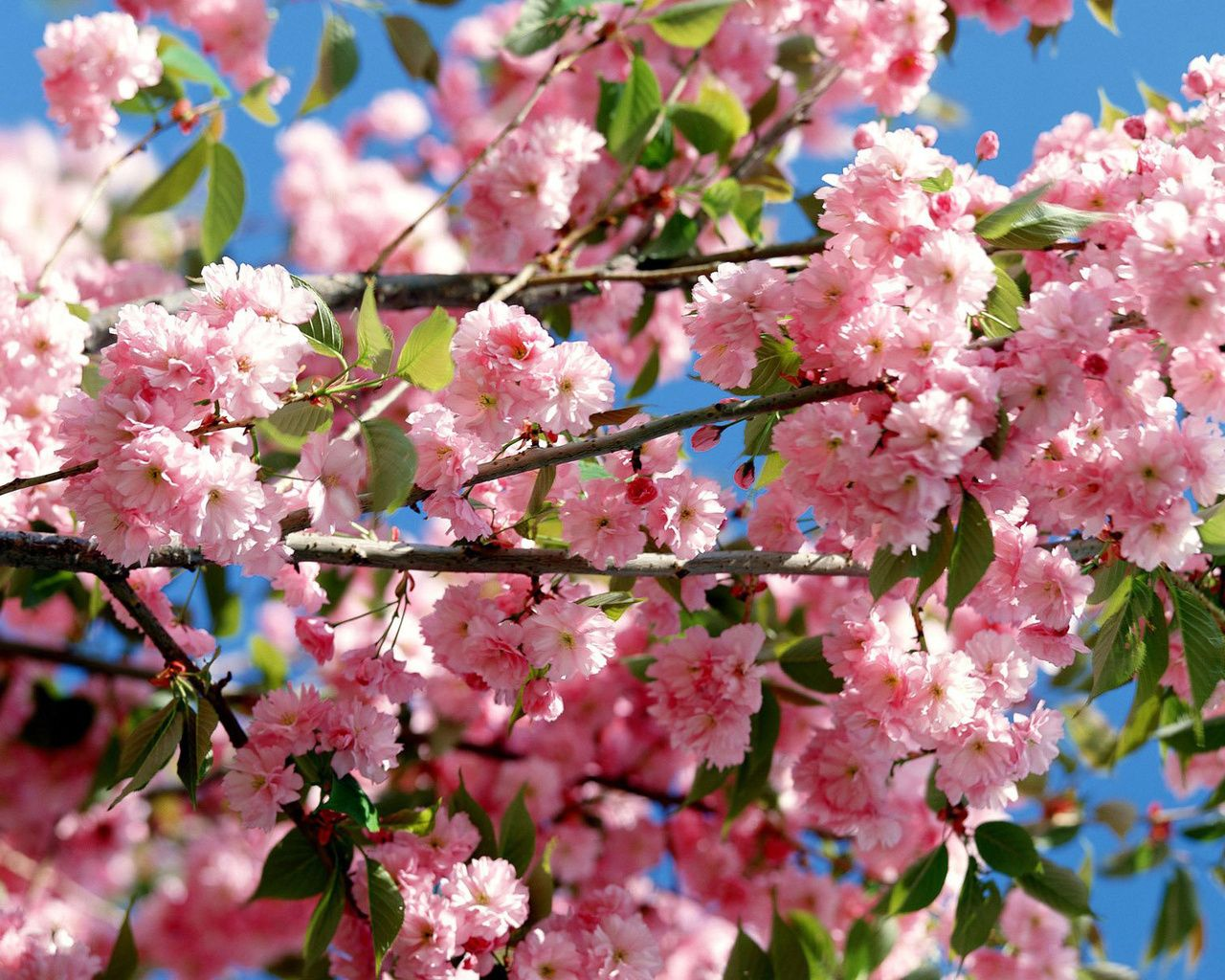 pictures of flowers | Colorful Flowers & Sky Wallpapers | HD ...