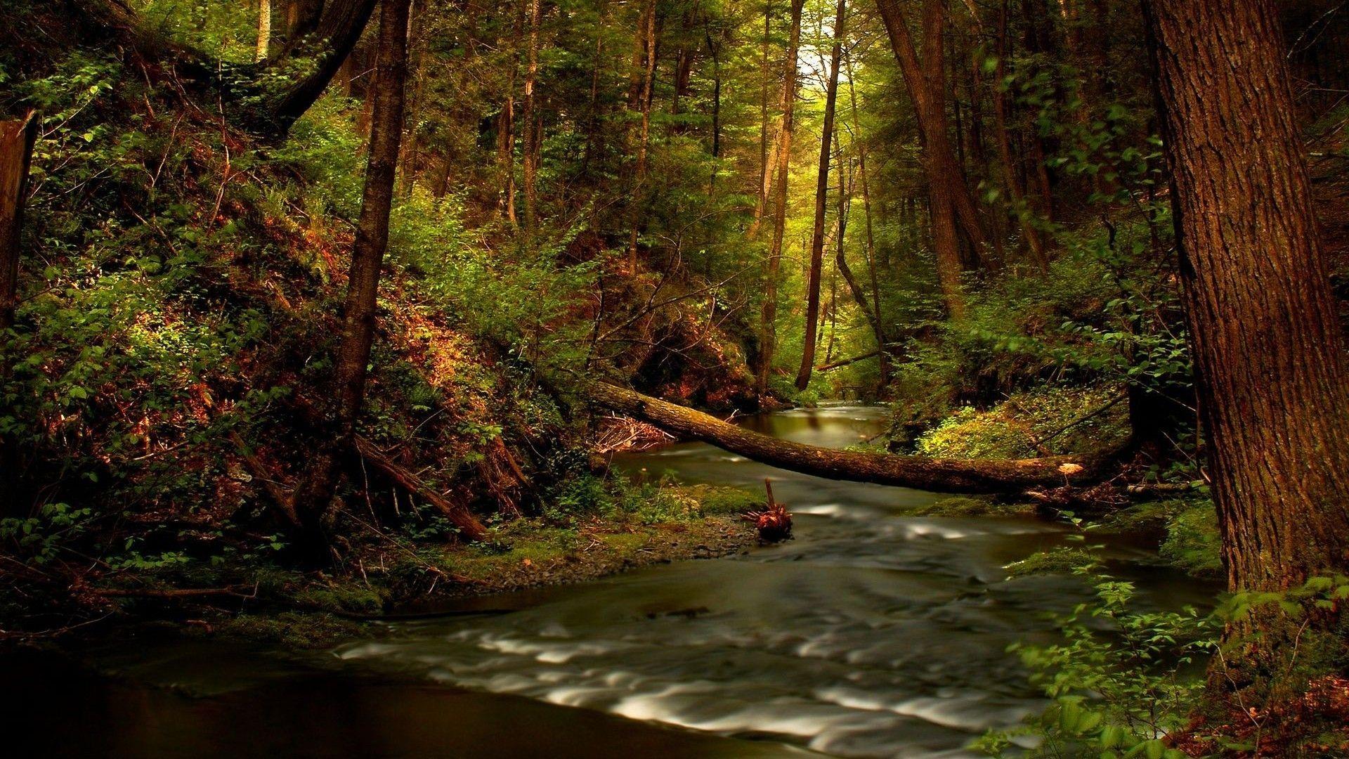 Forest River Wallpaper Hd