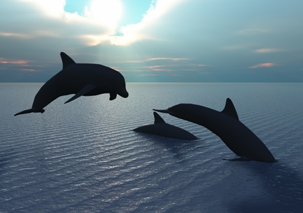 Dolphins in our beautiful Gulf of Mexico off the coast of Gulfport