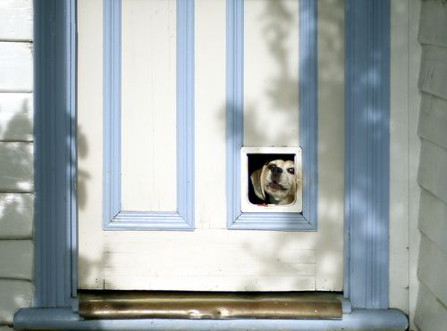 Our Doggie Doors And Cat Doors Stand Out Because Of Their Superior