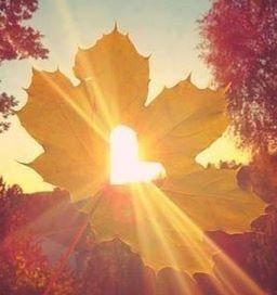 Schönes Bild, passend zum Herbstanfang.