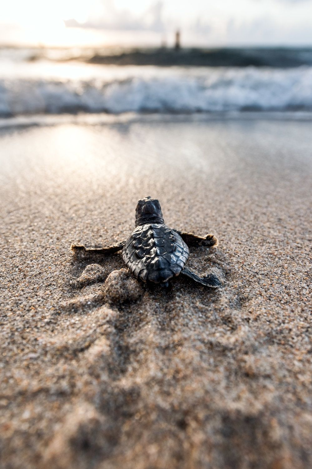 March 1st is the start of Turtle Season Turtle, Animals