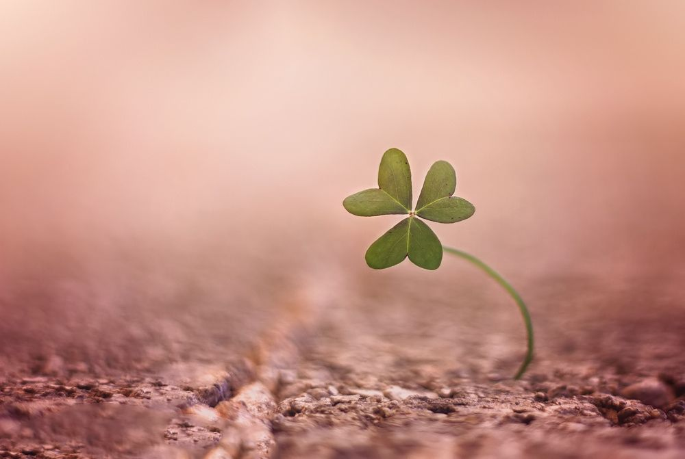 little Green by Linda photography