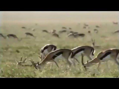 Image of: Australia Danger Animal Fight To The Death 720p Animal Videos Youtube Pinterest Danger Animal Fight To The Death 720p Animal Videos Youtube