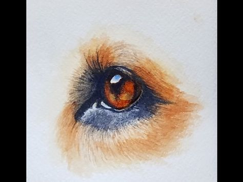 How To Paint A Realistic Dog Eye In Watercolor Youtube