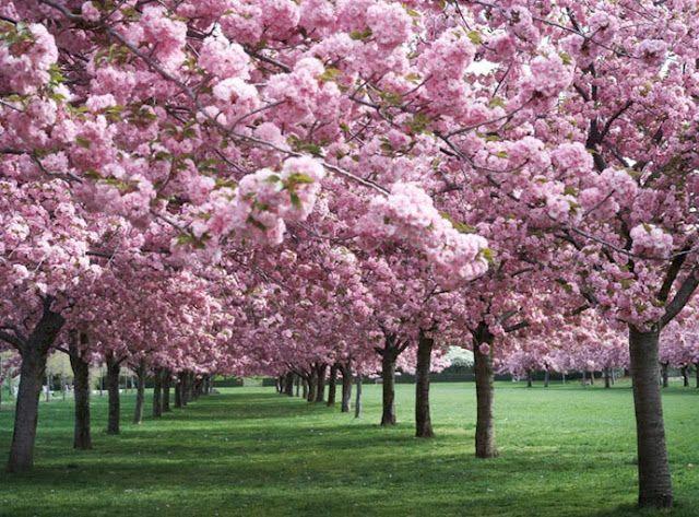 Get Here Spring Beautiful Gardens Flowering Trees Tree