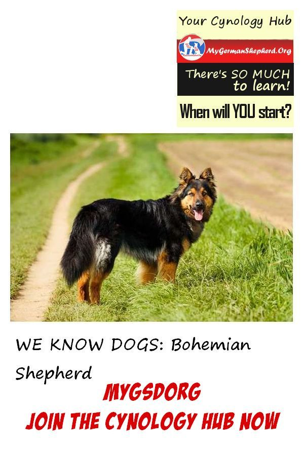HAPPY With DOG Subscribe (With images) Dogs, Shepherd