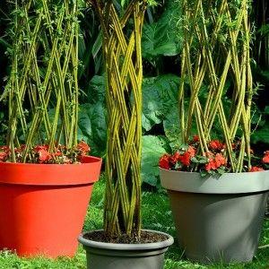 Osier vivant en pot recherche google archi v g tale for Recherche entretien jardin