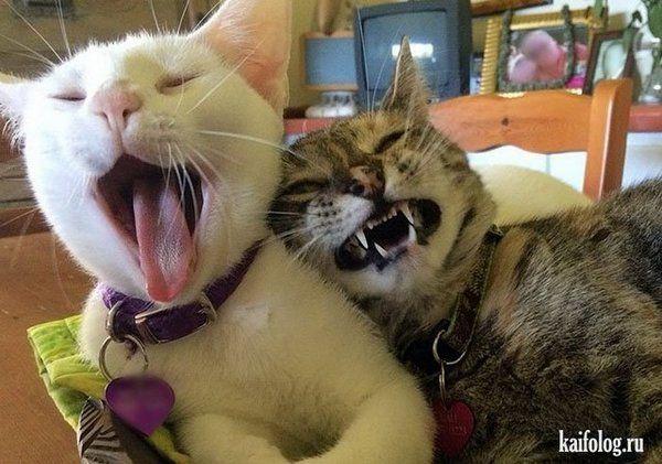 30 фото животных в смешных ситуациях | Смешные фото кошек ...