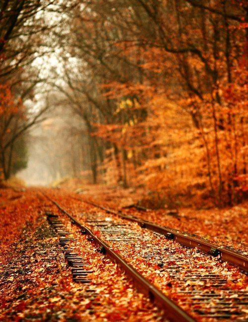 Autumn leaves #autumnleavesfalling
