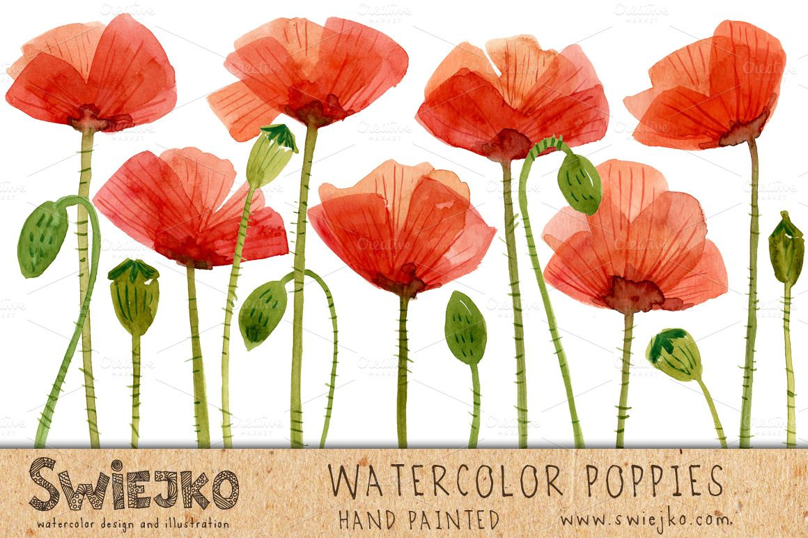 Watercolor Flowers, Poppies | Watercolor and Watercolor poppies