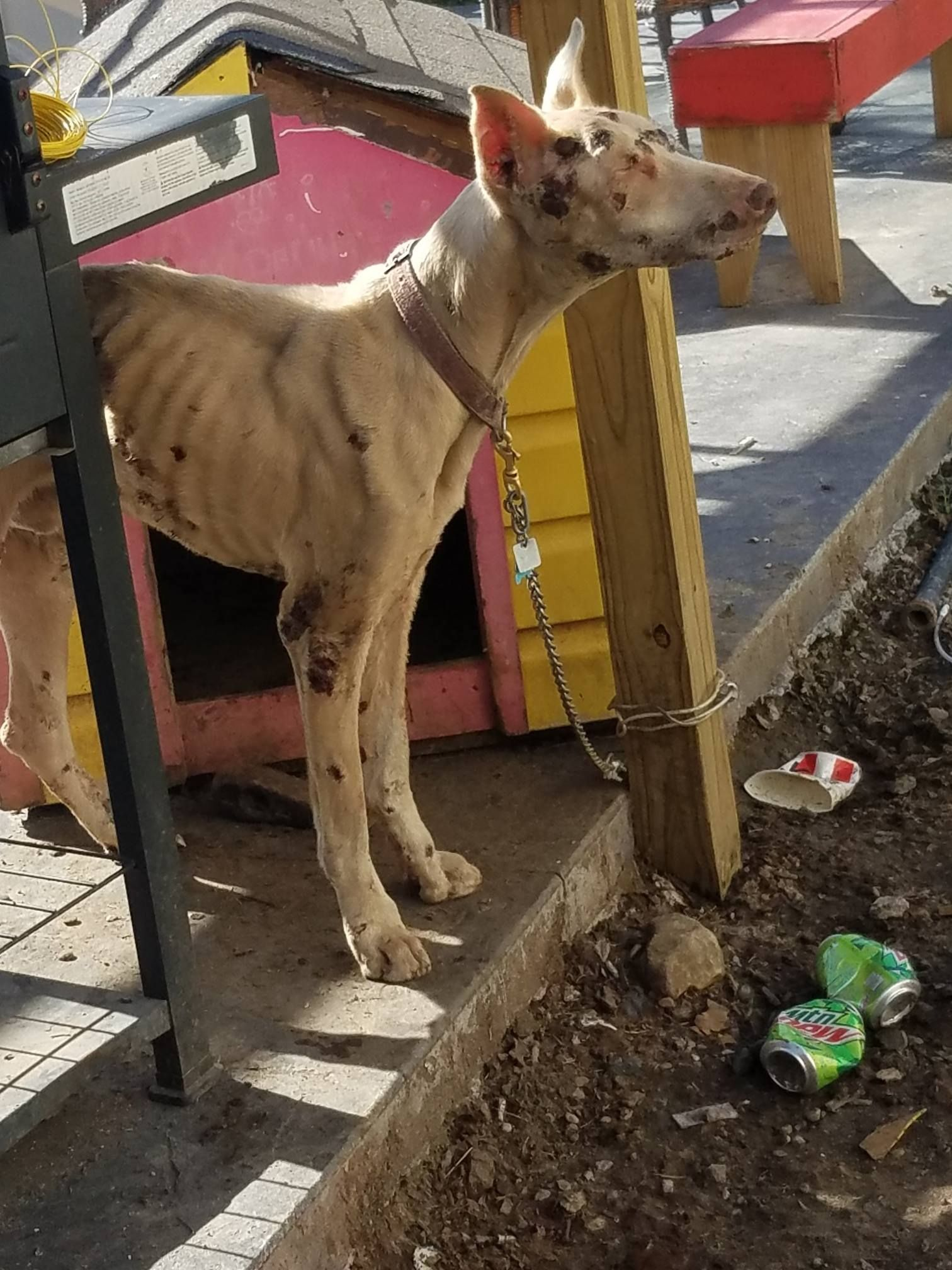Emaciated Dog Reportedly Starved and Neglected Deserves