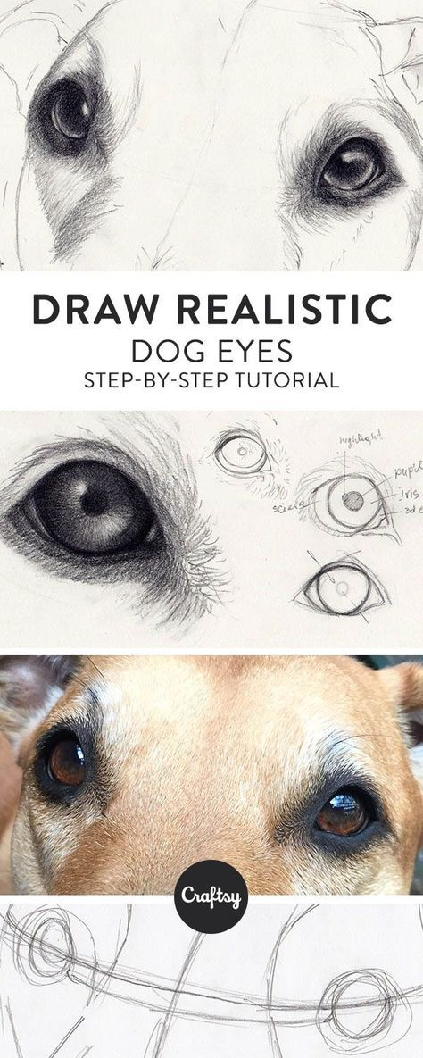 How to Draw Dog Eyes That Look Amazingly Realistic #realisticeye