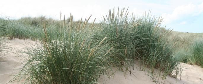 The Wildlife Trusts Grass Coastal Gardens Wildlife