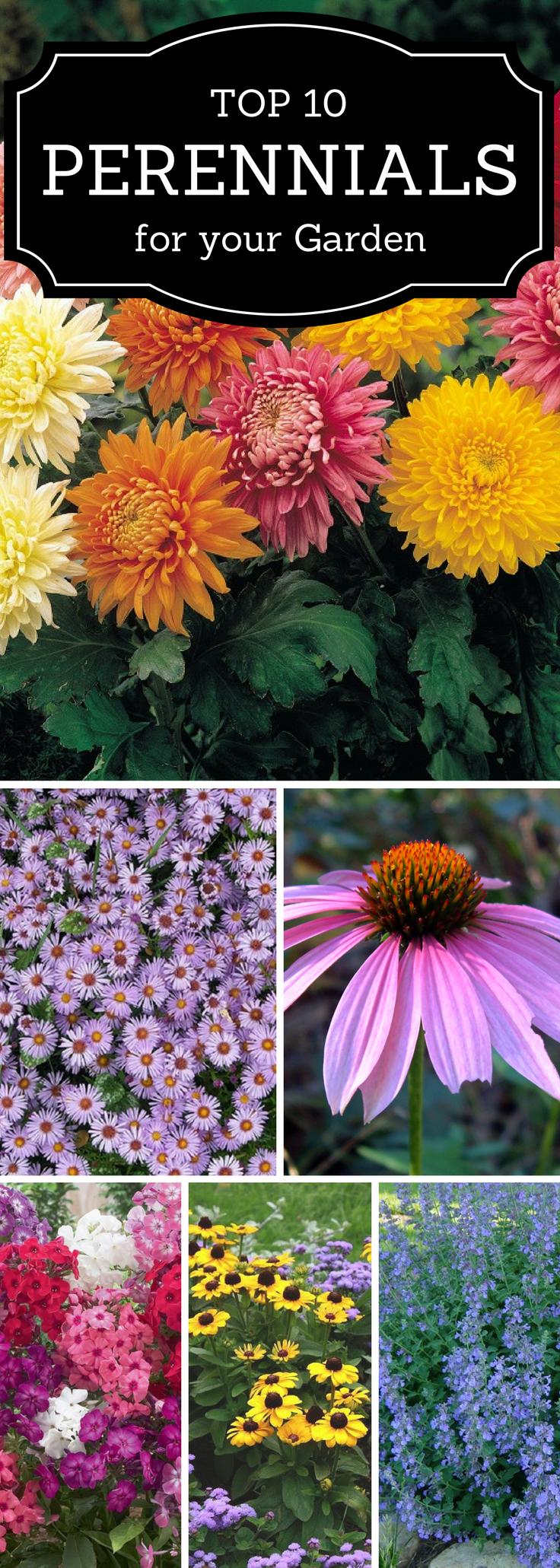 Top 10 Best Perennials For Your Garden Perennials Gardens And Flowers