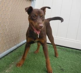 Adopt Buster On Baby Dogs Cute Funny Dogs Doberman Pinscher Dog