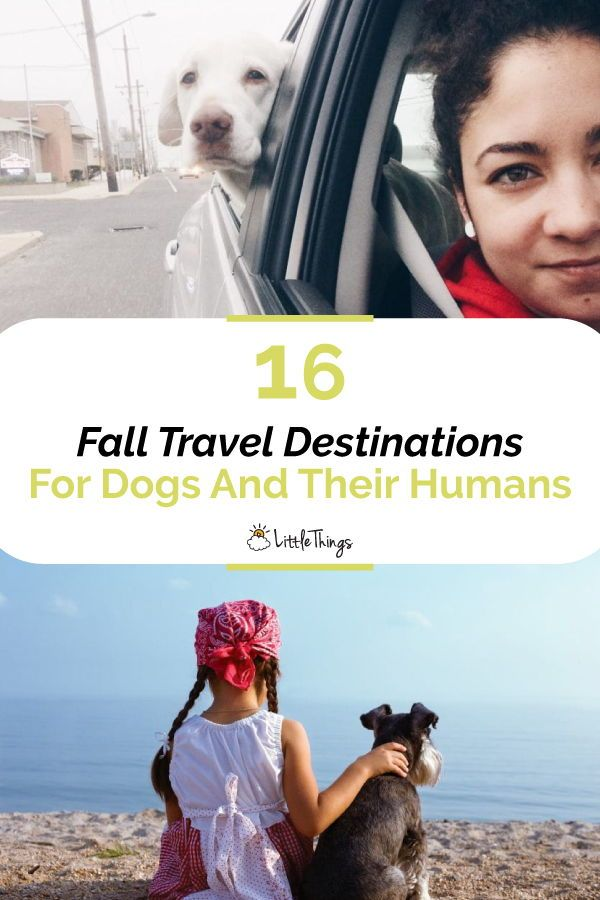 16 Fall Travel Destinations For Dogs And Their Humans: It can be hard to book the perfect hotel if you plan on bringing your dog with you during holiday. Here are 16 suggestions, especially if you're new to the idea of traveling with your pup. #travelideas #traveltips #travelguide #travelwithdogs