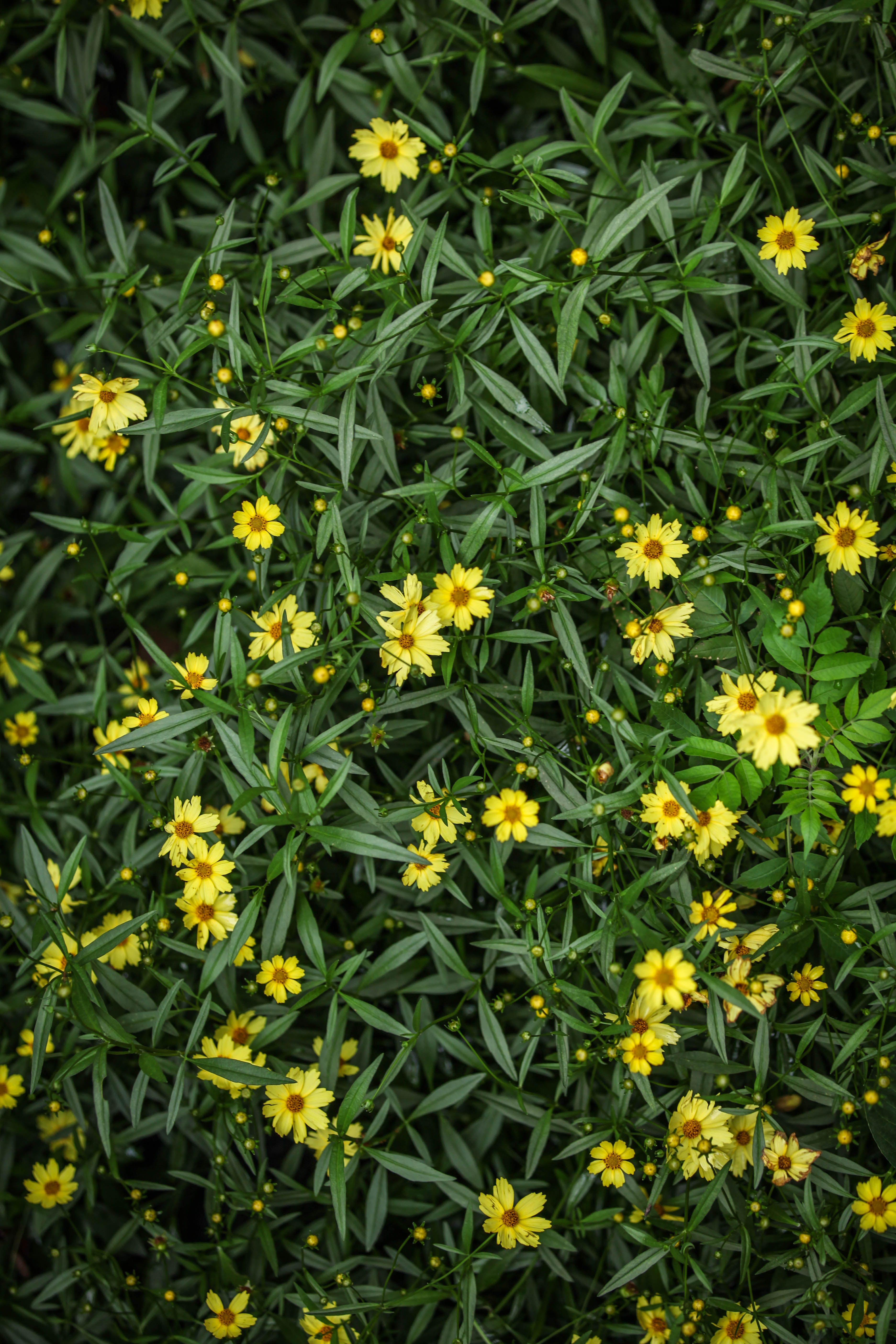Yellow flower bed