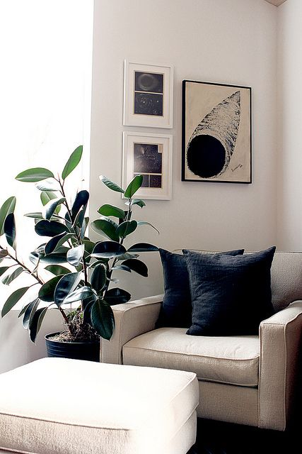 Building A Dream House The Hunt For House Plants Home Living Room Living Room Plants Home