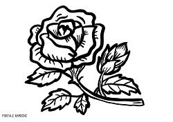 Disegni Di Rose Da Stampare E Colorare Gratis Portale Bambini