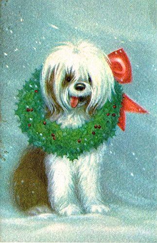 Cute Christmas Cardshaggy Dog With A Wreath Around His Neck