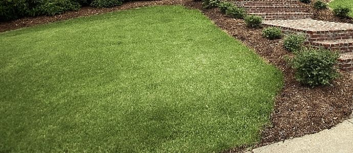 Turf Wars Sod Vs Hydroseed With Images Landscaping Inspiration Lawn And Garden Yard Landscaping