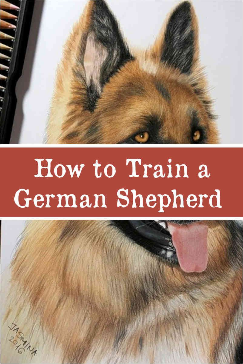 German Shepherd Dog Facts You Must Know Before Adopting German
