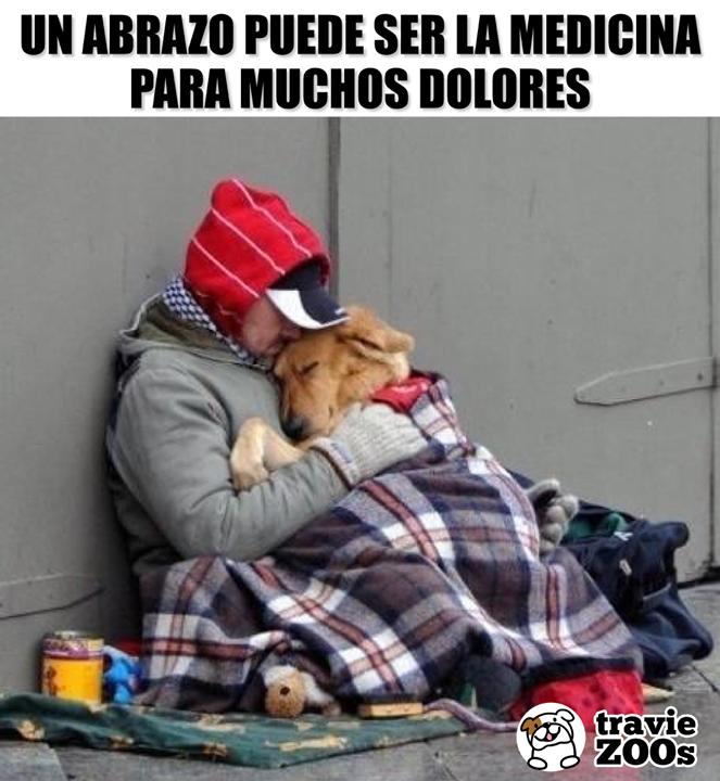 La Mejor Cura Para Las Enfermedades Con Imagenes Perros Mejor Amigo Del Hombre Amor De Perro
