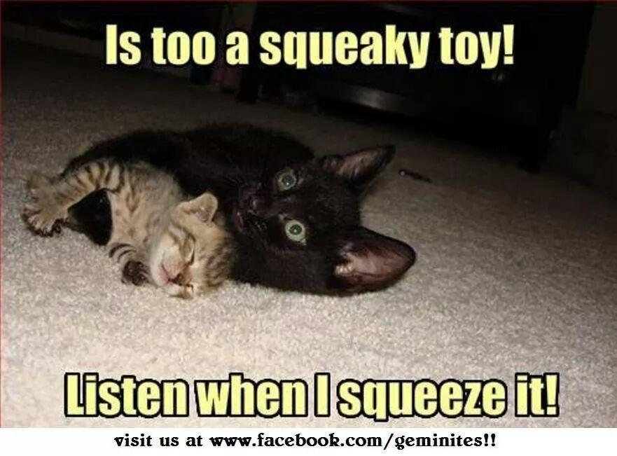 Squeaky Toy Kitten