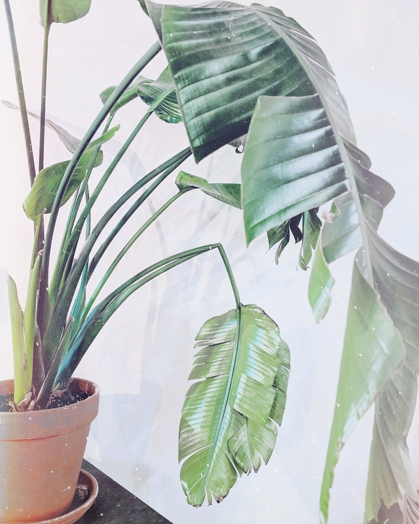 Large houseplant, indoorplants for open rooms #houseplants #plants on toys that open and close, weeds that open and close, succulents that open and close, flowers that open and close, windows that open and close,