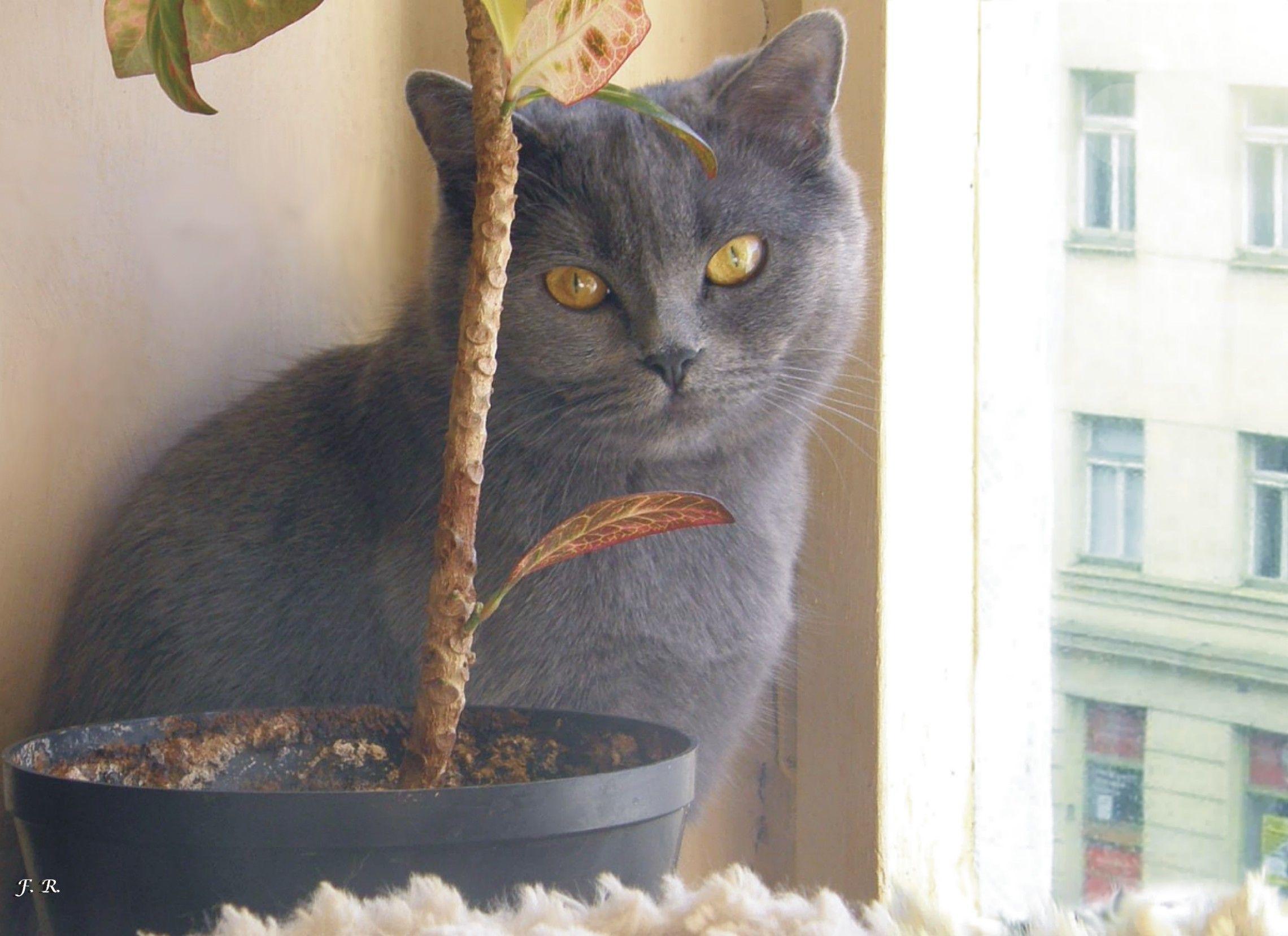 Ošklivé černé kočička pic