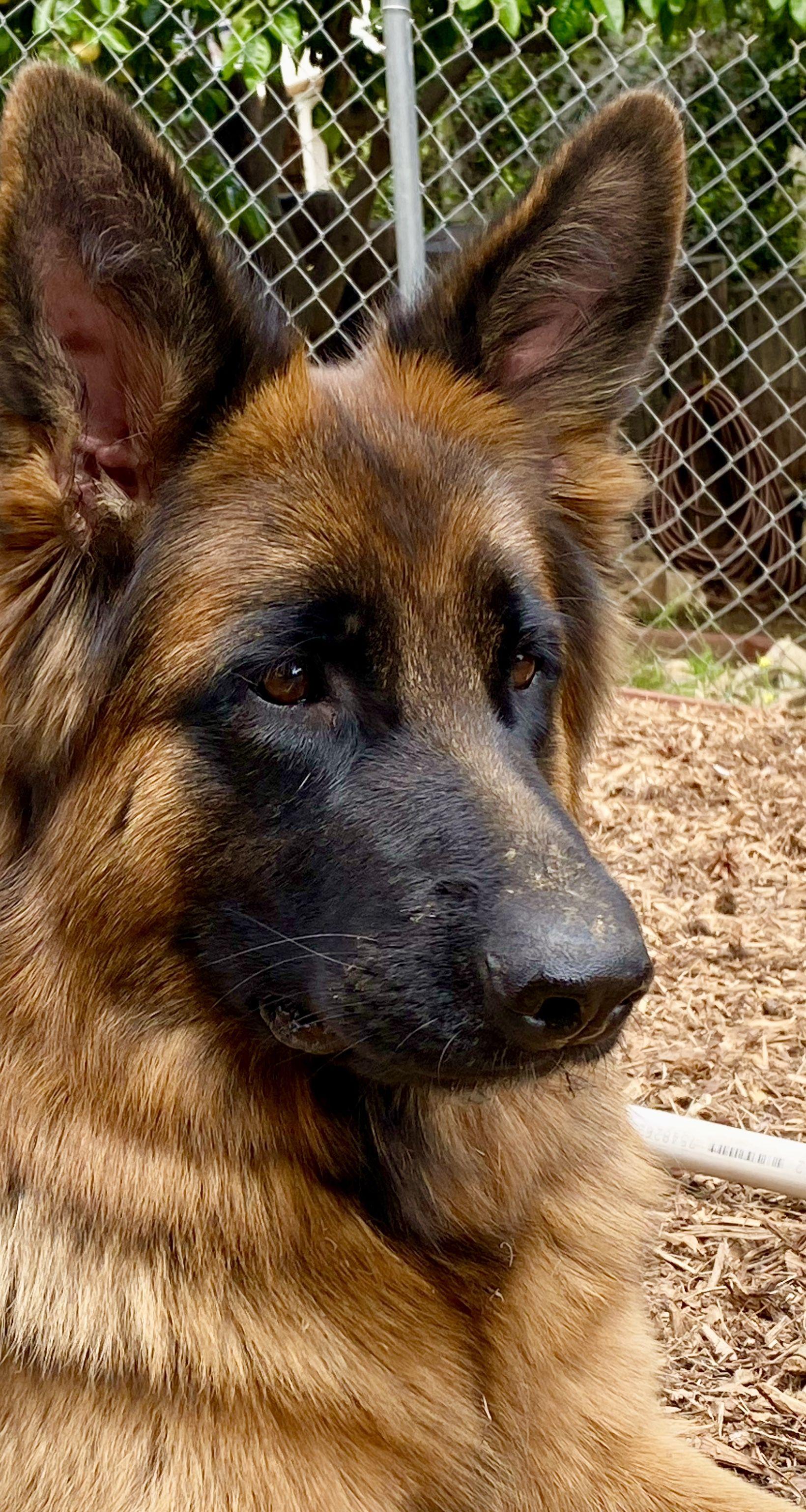 Photo of Schatzie