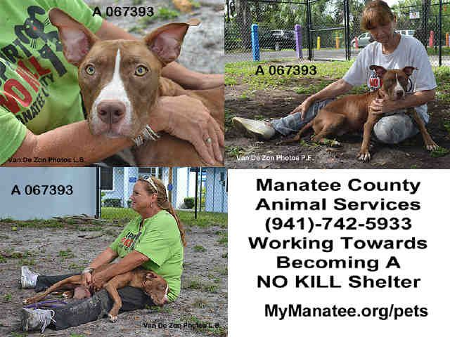 Found In Palmetto Florida Now Adoptable Petharbor Com Animal Shelter Adopt A Pet Dogs Cats Puppies Kittens H Animal Shelter Adoption Humane Society