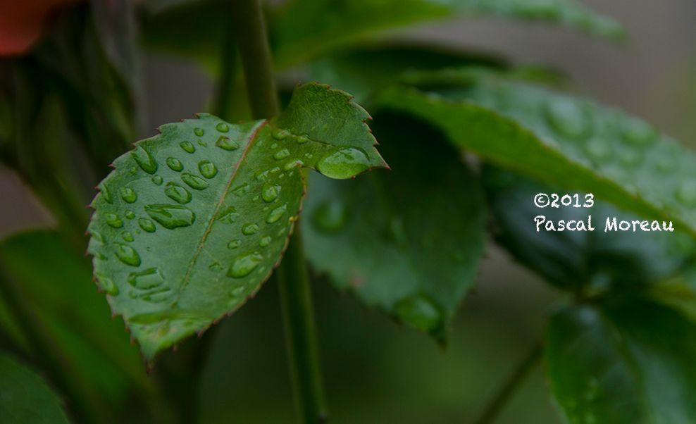 Après la pluie ... dans mon jardin